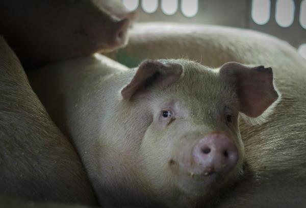 Le Projet Parti Animaliste